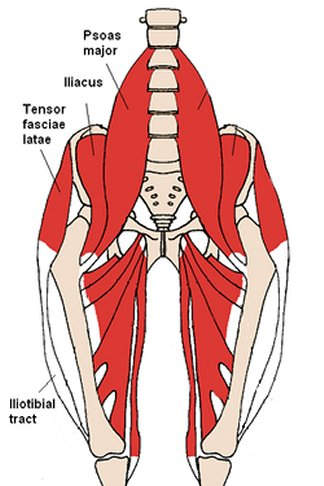 shows location of tensor fascia lata